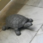 turtle in the farmacia:)
